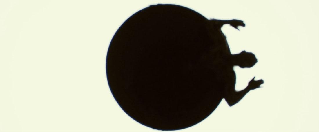 Arboria - Pupil